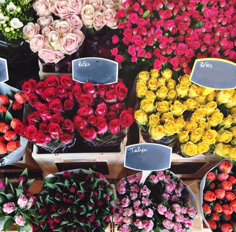 la flower market- sincerely jules8
